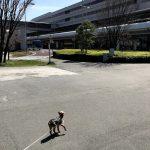 ペット連れで飛行機に乗る時に使える羽田空港のお散歩スペース